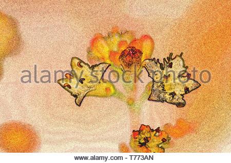 Florale Pracht aufgepeppt mit ausgefeilter Filter - Stockfoto
