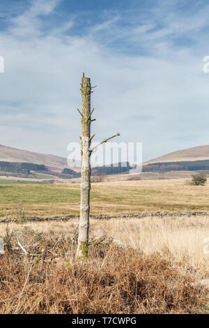 Alte verwitterte Baumstamm mit malerischen Hügel im Hintergrund. Brecon Beacons in Wales, Großbritannien - Stockfoto