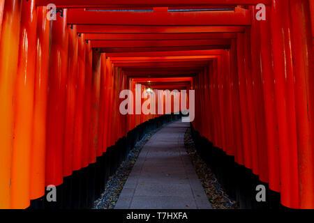 Fushimi Inari Taisha Torii-tor Tunnel - Stockfoto
