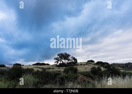 Dunkle Wolken am Morgen mit einsame Eiche auf dem Hügel Santa Susana State Historic Park in San Fernando Valley Gegend von Los Angeles, Kalifornien. - Stockfoto
