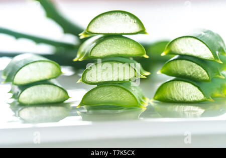 Frische Blätter der Aloe Vera auf den weißen Hintergrund: Querschnitt - Stockfoto