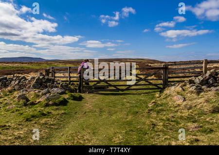 Ein Wanderer durch eine hölzerne Tor in der Nähe der Gewinne in den Cheviot Hills, Northumberland National Park, UK. April 2019. - Stockfoto
