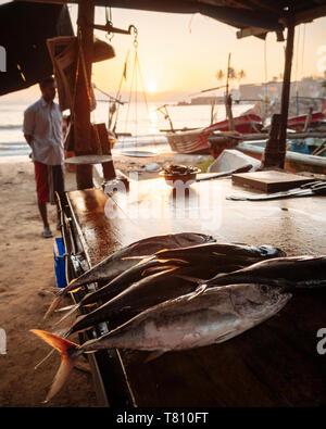 Fischmarkt in der Morgendämmerung, Galle, Südküste, Sri Lanka, Asien