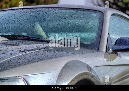2001 Ford Mustang GT Coupé glitzert in der Sonne nach einem Sommer Sturm. Winzige Wassertröpfchen auf der Karosserie sind wie Perlen. - Stockfoto