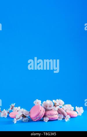 Französische macaroon Cookies mit Cherry Blossom Blumen auf einem Himmel blauer Hintergrund mit kopieren. Farbe pop Essen - Stockfoto