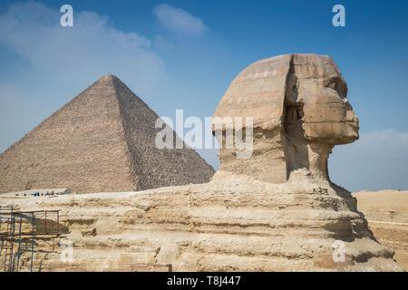 Kamel in der Nähe von Gizeh Pyramide Komplex in der Nähe von Kairo, Ägypten - Stockfoto