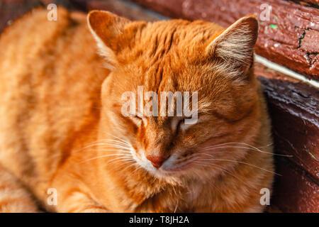 Portrait von rote Katze liegt auf einer Bank und schlafen in der Sonnenstrahlen - Stockfoto