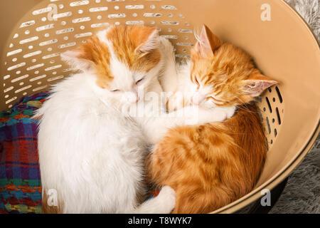 Süße kleine Kätzchen im Korb schlafen - Stockfoto