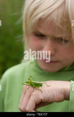 Junge, Art mit Heuschrecke auf der Hand, Zwitscherschrecke, Zwitscher-Heupferd, Heupferd, Weibchen mit Legebohrer, Tettigonia cantans, zucken Gree - Stockfoto
