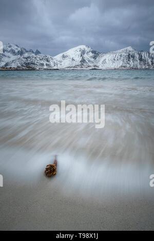 Wellen waschen um einen Ast vor schneebedeckten Berge am Strand von Ramberg, Lofoten, Norwegen - Stockfoto