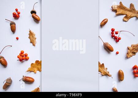 Herbstlaub, Rowan und Eicheln auf einem weißen Hintergrund. In der Mitte des leeren Raum für Text. - Stockfoto