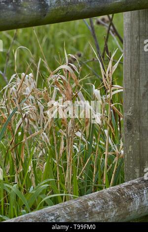 Mit hölzernen Zaun und hohe Gräser in der Wiese, Evesham, England, Vereinigtes Königreich, Abstrakte, Europa - Stockfoto