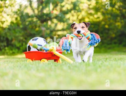 Hund wählt und holt das Seil Spielzeug von Horten von pet-Spielzeug in den Warenkorb - Stockfoto