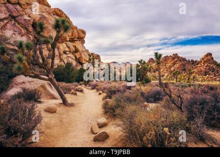 Desert Trail in Joshua Tree National Park, - Stockfoto