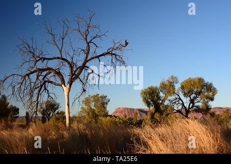 Landschaft im Watarrka National Park. Northern Territory. Australien - Stockfoto