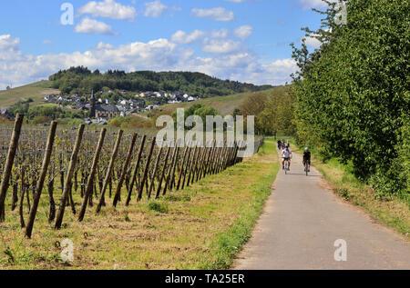 Radfahrer auf der Straße entlang der Mosel in Niederemmel Deutschland mit Weinberge auf den steilen Hängen