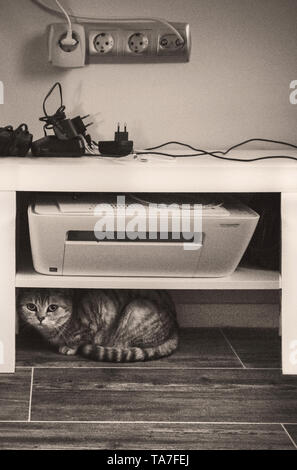 Katze sitzt unter dem Regal mit einem gadjets - Stockfoto