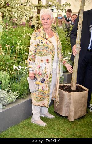 Dame Judi Dench wurde mit einem Bäumchen Ulme Die elming der Britischen Landschaft ab diesem Jahr zu starten. Hillier Baumschulen, RHS Chelsea Flower Show, London - Stockfoto