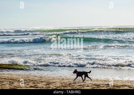 Laufen streunende Hunde am Strand und Surfer auf den Wellen - Stockfoto