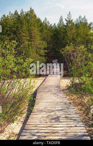 Holz- Pfad führt durch die Dünen an den Wald - Stockfoto