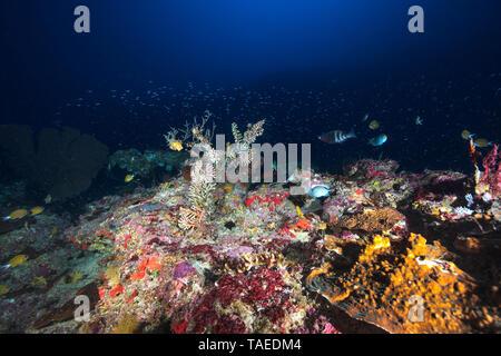 Unterwasser Atmosphäre bei 80m Tiefe, Mayotte. Der schwarze Rand, die in der blauen Hintergrund gesehen werden kann und der Oberseite der zweiten Riff Wand, die in einer Tiefe von 55 Metern. - Stockfoto