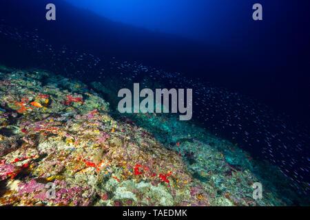 Farben bei 80m Tiefe, Mayotte. Eine Farbe, die in 80 m Tiefe entdeckt werden können. - Stockfoto