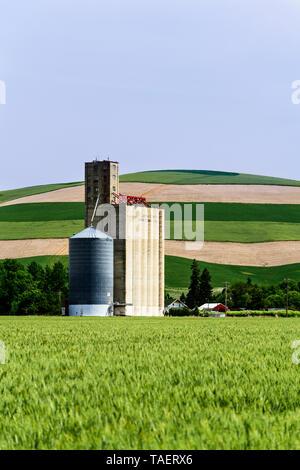 Getreidesilos in einem Feld in der Nähe von Prescott, Washington State, USA - Stockfoto