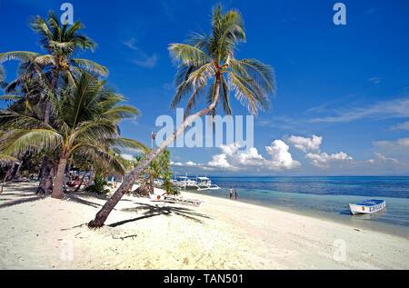 Palmen am Bounty Beach, Insel Malapascua, Cebu, Philippinen - Stockfoto