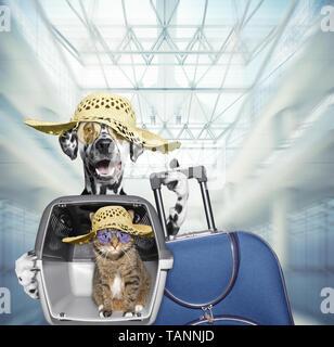 Dalmatiner Hund und Katze warten am Flughafen mit blauen Koffer - Stockfoto
