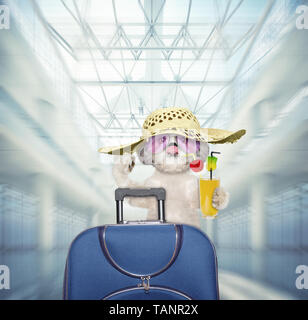 Shitzu Hund wartet am Flughafen mit blauen Koffer - Stockfoto