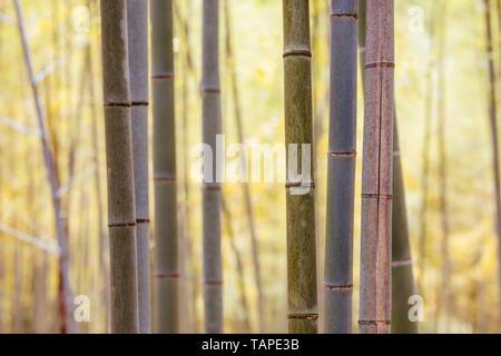 Geheime Bambus Wald von fushimi Inari Schrein