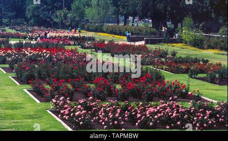 Diese Rose Garden begann in den 1920er Jahren bei 15.000 Rosenstöcken von 145 Sorten im Exposition Park in Los Angeles, Kalifornien, USA gepflanzt wurden. Heute ist es eine schöne und ruhige Oase im Herzen der Metropole. Die 7,5 Hektar (3 Hektar) Garten zieht jedes Jahr tausende Besucher an und hat sich von der Stadtentwicklung durch die US National Register der Historischen Stätten in 1991 hinzugefügt geschützt wurden. Der Garten ist für die Öffentlichkeit ohne Gebühr, außer wenn jährlich für Wartungsarbeiten vom 1. Januar bis 15. März geschlossen. - Stockfoto