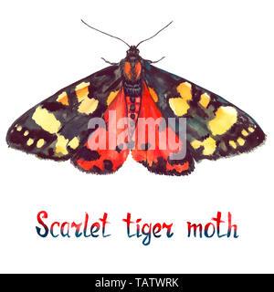 Scarlet Tiger Moth, Handgemalten Aquarell Abbildung mit handschriftlichen Aufschrift - Stockfoto