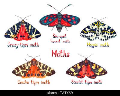 Jersey Tiger, Six-spot Burnet Moth, Magpie, Garten tiger und Scarlet Tiger Moth, Handgemalten Aquarell Abbildung motten Sammlung auf Wh isoliert - Stockfoto