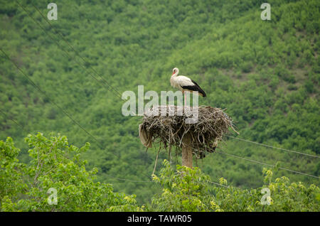 Storch in einem Nest stehend - Stockfoto