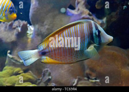 London Zoo Aquarium, ZSL London Zoo, London, UK - Stockfoto