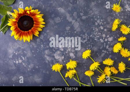 Schöne, gelbe Löwenzahn und Sonnenblumenkerne auf einem schwarzen Hintergrund, Top View, close-up. Eine interessante, ungewöhnliche und kreative. Flach. - Stockfoto