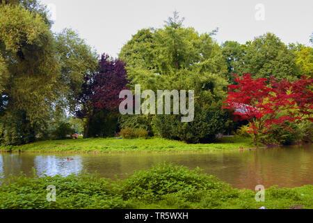 Englischer Garten, Deutschland, Bayern, Muenchen - Stockfoto