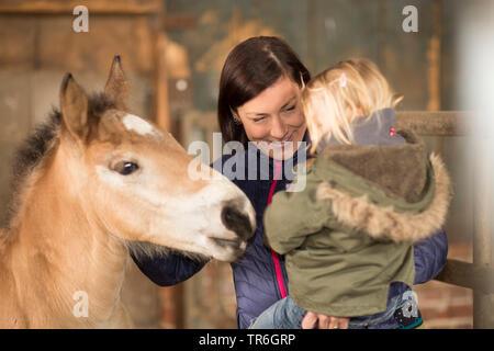 Inländische Pferd (Equus przewalskii f. caballus), Mutter mit einem kleinen Mädchen auf dem Arm, ein Fohlen in einer stabilen, Deutschland - Stockfoto