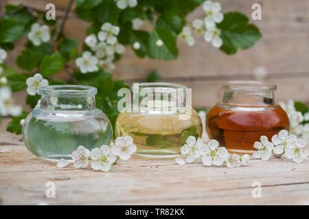 Tinktur aus Weißdornblüten, Weißdorn-Sky, weißdornblüten-Tinktur, 3 unterschiedlich alte Ansätze im Vergleich, Weißdorn-Blütentinktur, Weißdorn, Wir - Stockfoto