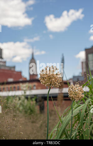 High Line Park in NYC - Stockfoto