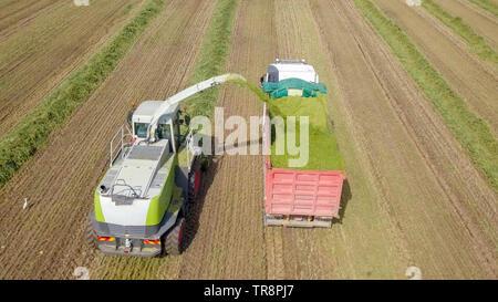 Mähdrescher ernten ein grünes Feld- und entlädt Weizen Silomais auf eine doppelte Lkw-anhänger - Luftaufnahmen - Stockfoto