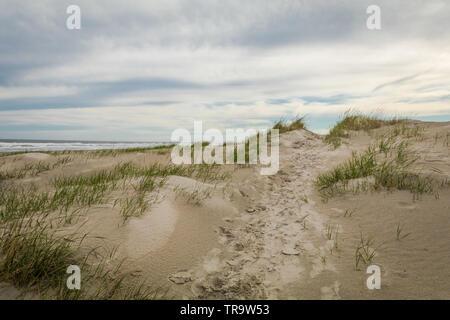 Sanddünen im Frühjahr im Diamond Beach, Wildwood Crest, NJ - Stockfoto