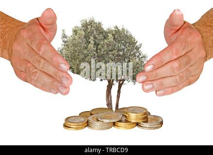 Olive Tree von Händen geschützt - Stockfoto