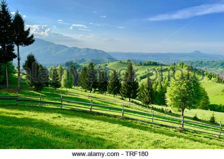 Malerische Landschaft von grünen Gras Wiese, Wald, Bäume, in einem ländlichen Gebiet in den Karpaten, Rumänien. Bewölkter Himmel - Stockfoto