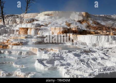 Thermische Eigenschaften, Mammoth Hot Springs, Yellowstone National Park, Montana, USA, von James D Coppinger/Dembinsky Foto Assoc - Stockfoto
