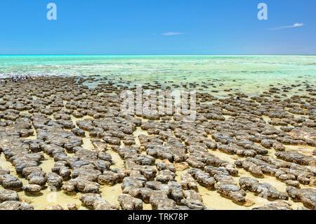 Stromatolithen sind rock Strukturen durch Bakterien im flachen Wasser - Hamelin Pool, Denham, WA, Australien gebildet - Stockfoto