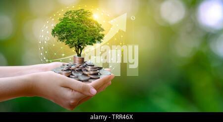 Hand Münze Baum der Baum wächst auf dem Stapel. Geld sparen für die Zukunft. Investment Ideen und das Wachstum der Unternehmen. Grüner Hintergrund mit bokeh Sun - Stockfoto