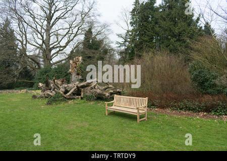 Eine Parkbank an einem alten toten Baum - Stockfoto