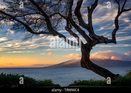 Branching tree und Sonnenuntergang von Maui. West Maui im Hintergrund. Maui, Hawaii - Stockfoto